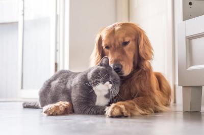 adopta un amor peludo